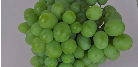 کشمش از انگور مویز
